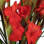 Express your heartfelt sympathy with beautiful flowers or a lush plant