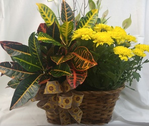 European Garden in Wicker Basket from Amy's Flowers and Gifts in Dallas, GA