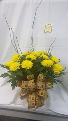 Small  Mum Plant in Wicker Basket GP003995 from Amy's Flowers and Gifts in Dallas, GA